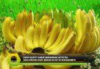 Saraf Kejepit Sangat Mengganggu Aktivitas, Coba Konsumsi Buah-buahan Ini untuk Meredakannya