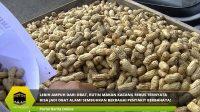 Rutin Makan Kacang Rebus Ternyata Bisa jadi Obat Alami