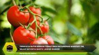 Ternyata Rutin Makan Tomat Bisa Datangkan Manfaat Ini