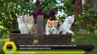 Kisah Ulama Sufi yang Diampuni Dosanya oleh Allah SWT Karena Menolong Anak Kucing