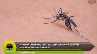 Nyamuk Langsung Mati Berjatuhan Hanya Dengan Menaruh 1 Bahan Dapur IniNyamuk Langsung Mati Berjatuhan Hanya Dengan Menaruh 1 Bahan Dapur Ini